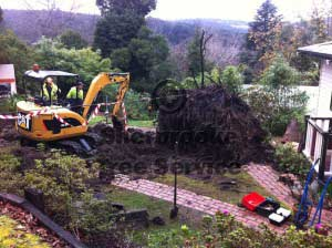Tree Removal Belgrave