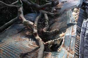 Mulching Branches Belgrave