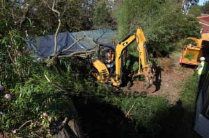 tree excavator gets into position